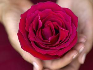 tantra-red-rose-massage-brighton